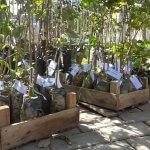 Prefeitura de Três Rios realiza distribuição gratuita de mudas